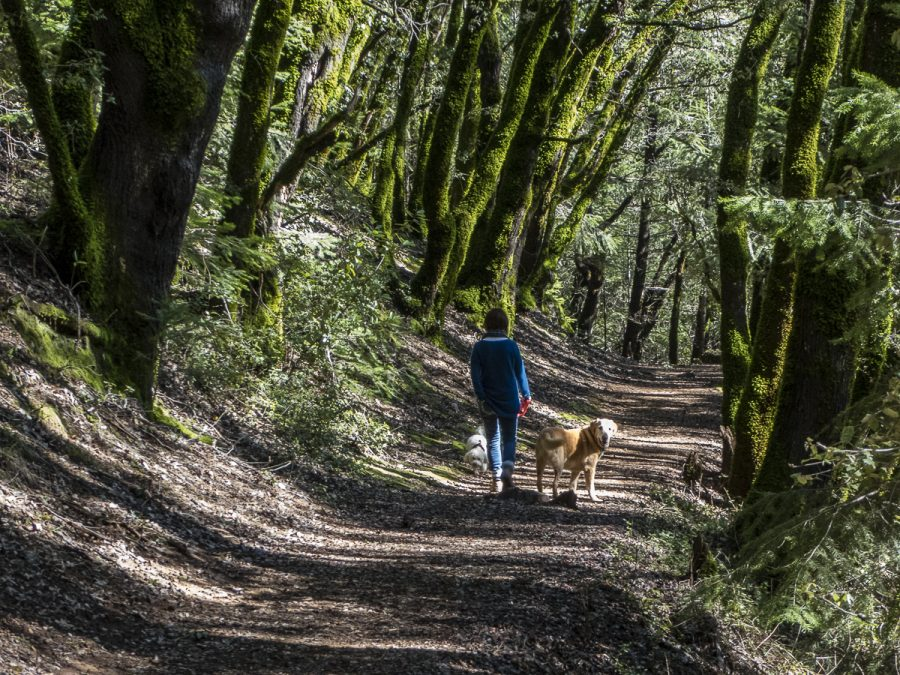 Stevens Trail, Colfax CA