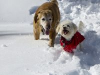 dogs snow play